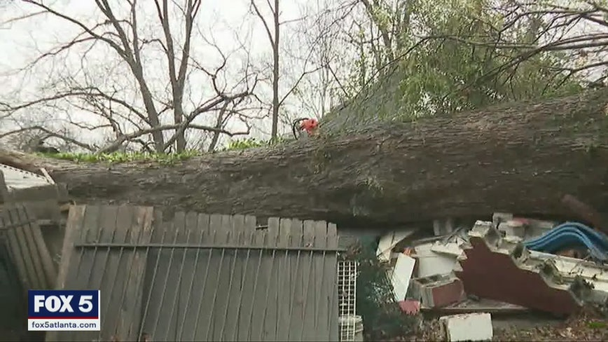 Heavy rains cause large trees to topple across north Georgia