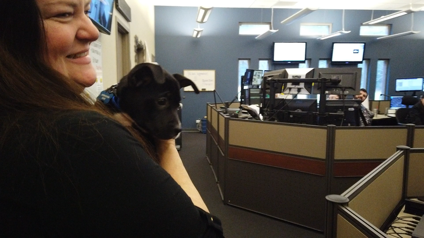 911 turns to puppies to relieve dispatcher stress