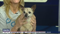 Pet of the Day: March 12, 2020