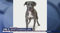 Pet of the Day: March 26, 2020