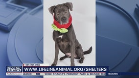 Pet of the Day: March 31, 2020