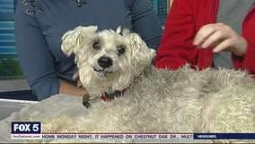 Pet of the Day: March 10, 2020