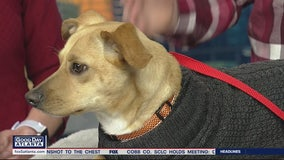 Pet of the day: Eric from the Humane Society of Northeast Georgia