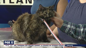 Pet of the Day: March 3, 2020
