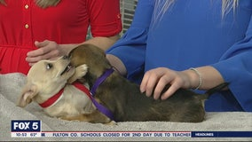 Pet of the Day: March 11, 2020