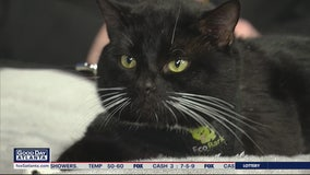 Pet of the Day: March 13, 2020