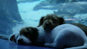 Georgia Aquarium opens up for 'play day' for 4-legged friends from the Atlanta Humane Society