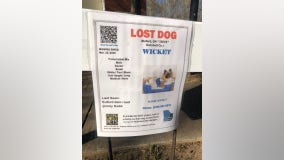 Therapy dog stolen during Buford home break-in