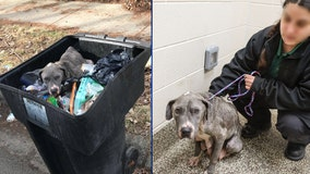 MHS rescues dog left in trash can in Detroit, still looking for her puppies
