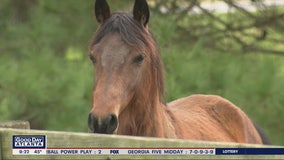 Nearly 2 dozen neglected horses get second chance thanks to Bethlehem-based non-profit