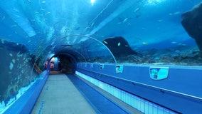 Despite closure, work never stops inside Georgia Aquarium