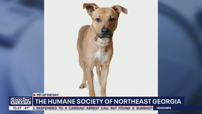 Pet of the Day: April 1, 2020