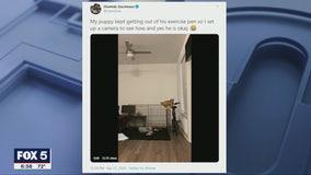 Falcons WR Olamide Zaccheaus' puppy pulls off hilarious hijinx