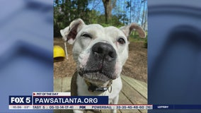 Pet of the Day: April 2, 2020