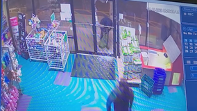 Police: Thieves steal pricey puppies from Dunwoody pet store