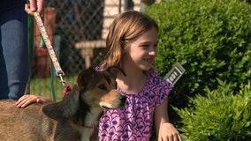 Pet adoptions on the rise during coronavirus outbreak