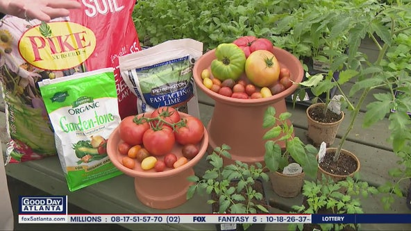 Growing tomatoes with Pike Nurseries