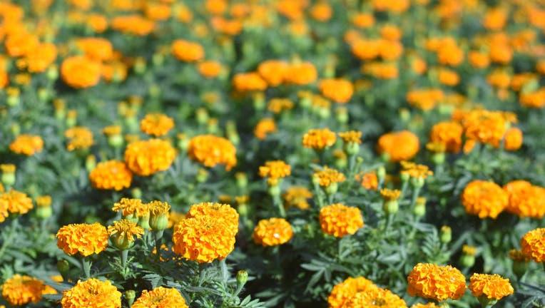 525344ec-Flowers