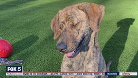 Pet of the Day: May 27, 2020