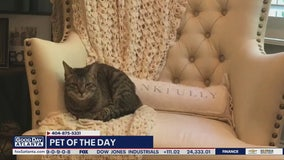 Pet of the Day: May 12, 2020