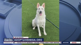 Pet of the Day: May 13, 2020