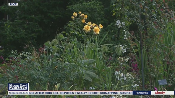 Atlanta Botanical Garden set to reopen to public