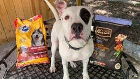DeKalb County shelter giving away pet food, flea treatments