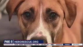Pet of the Day: June 26, 2020