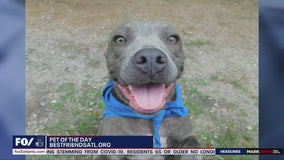 Pet of the Day: June 12, 2020