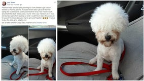Woman's Facebook post about dog's hilarious haircut goes viral