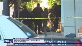 San Francisco authorities capture mountain lion in Mission Bay neighborhood