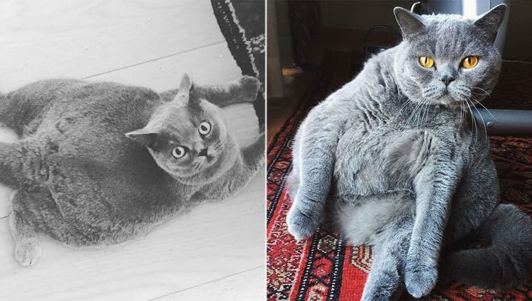 Pitoe-The-Cat-IG (1)