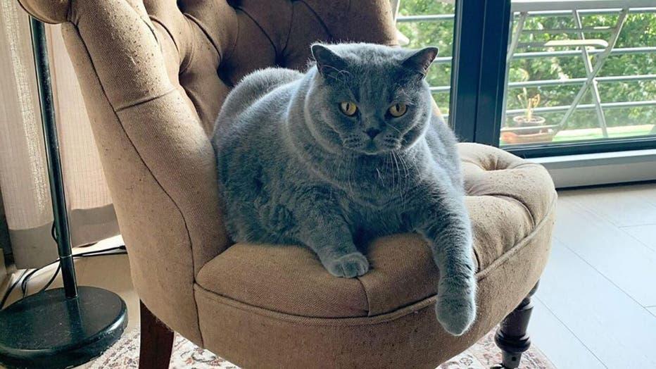 Pitoe-The-Cat-2.jpg