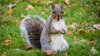 Squirrel tests positive for bubonic plague in Colorado