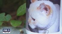 Deceased family's cat receives voter registration application