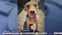 Pet of the Day: Gustavo