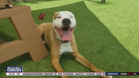 Pet of the Day: July 8, 2020