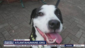 Pet of the Day: July 16, 2020