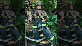 DC firefighters rescue 6 dogs from burning home in sweltering heat