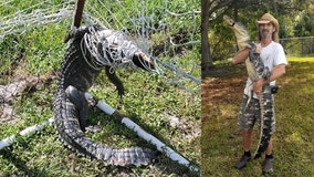 Alligator found tangled in soccer net at Braden River Middle School