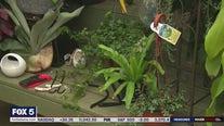 Pike Nurseries talks about hanging plants