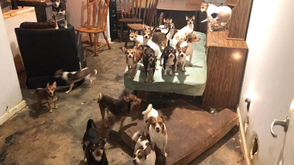 Over 180 dogs rescued from hoarding situation at Georgia home