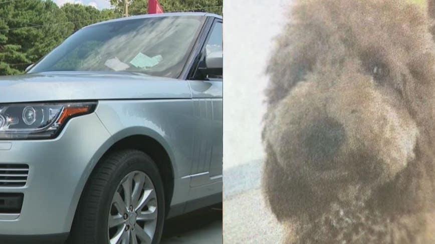 Dog missing after string of Range Rover thefts, reward offered