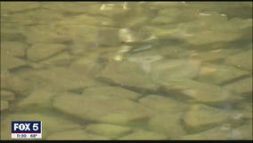 Chattahoochee River Keeper: PPE pollution could impact drinking water