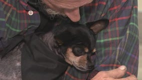 Houston woman helps stranger save dog's life by paying $14K vet bill
