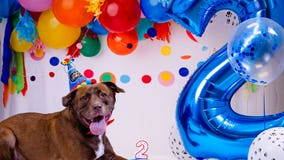 Gwinnett County Animal Shelter marks dog's 2nd birthday with epic bash