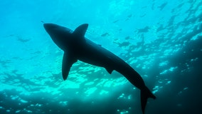 Indictment accuses 12 of illegally trading shark fins, drugs
