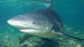 Pregnant woman pulls husband to safety after shark attack in Florida Keys