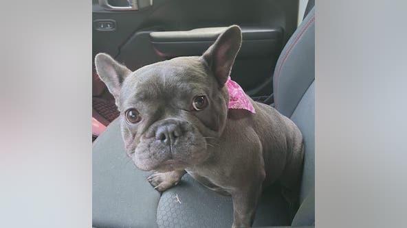 Dog taken during car theft in Buckhead
