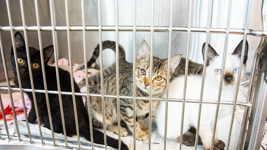 Dozens of cats and kittens rescued from Georgia condo